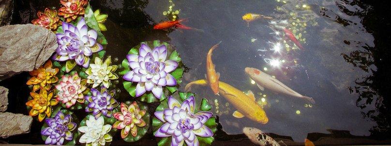 Nel laghetto pesci e non solo cose di casa for Vasca x pesci rossi