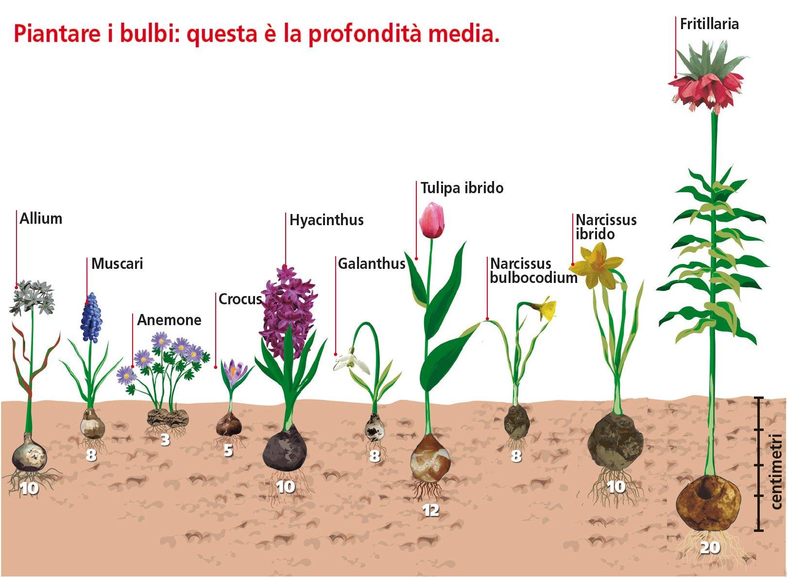 Quali Bulbi Piantare In Primavera piantare ad aprile le bulbose per l'estate - cose di casa