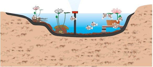 Laghetto artificiale pulizia e manutenzione cose di casa for Quali pesci mettere nel laghetto
