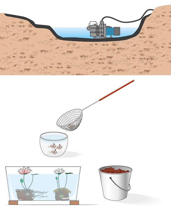 Laghetto artificiale pulizia e manutenzione cose di casa for Vendita pesci per laghetto