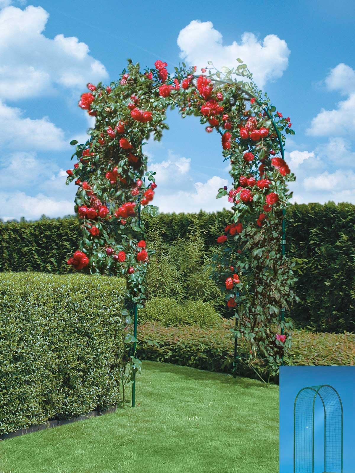 Rosa Rampicante In Vaso rose: le cure di stagione in primavera per foglie e rinvaso