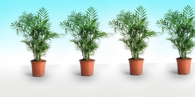 Corsi gratuiti per conoscere le piante