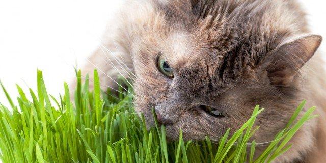 Cani e gatti: si curano anche con le erbe