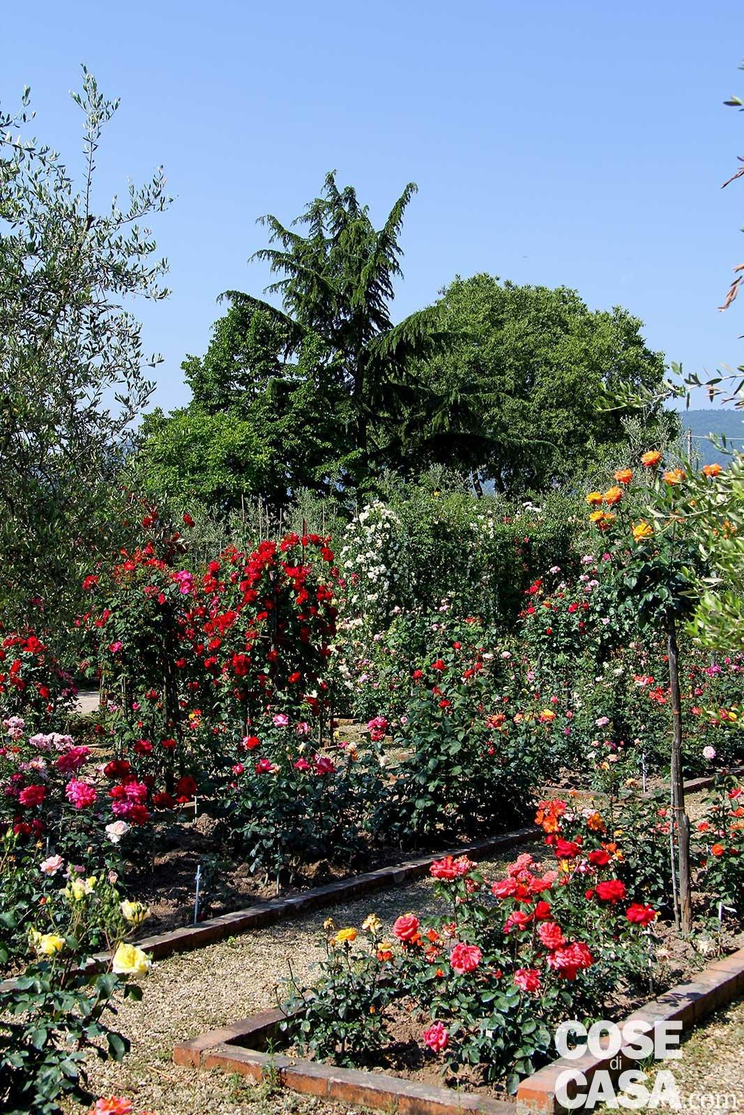 Rose una collezione storica con tante idee da copiare for Rose da giardino