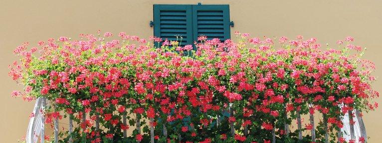 lavatrice sul balcone verandato : Gerani rigogliosi sul balcone - Cose di Casa