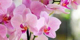 È ora di spostare le orchidee