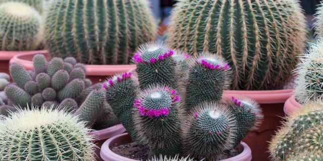 Piante grasse cure speciali se rimangono in casa cose - Le piante grasse si possono tenere in casa ...