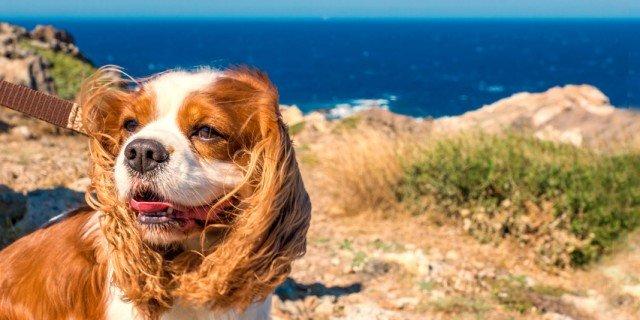 Al mare con il cane