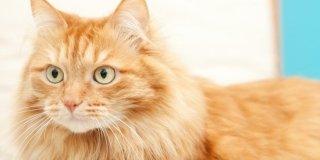 Per il gatto: la lettiera giusta