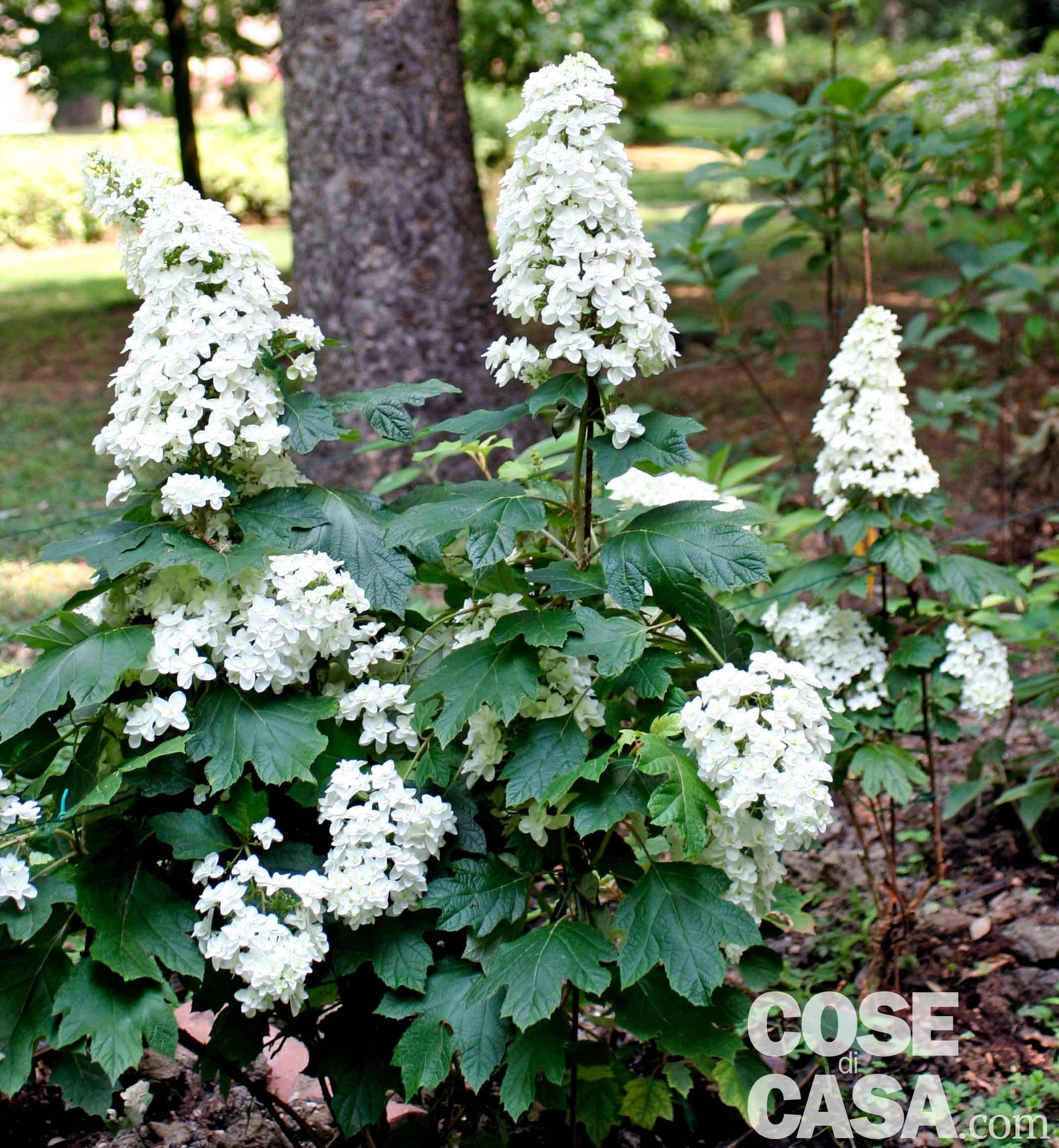 Sotto l albero all ombra che cosa piantare cose di casa for Cespugli fioriti da giardino
