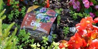 Alghe: un aiuto anche in giardino