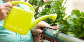 Irrigare i vasi in poco tempo