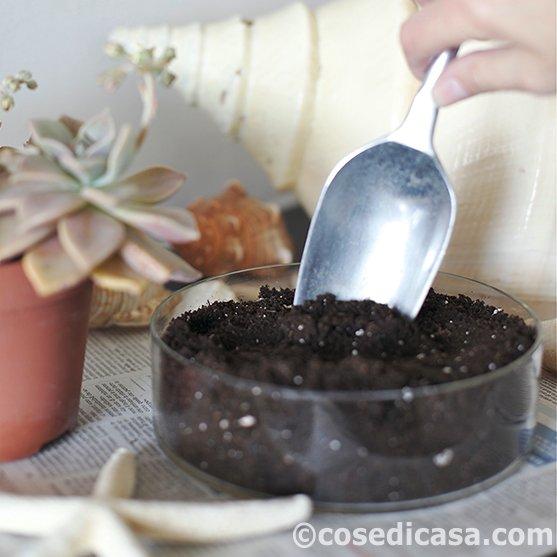 1 . Riempire Il Vaso Contenitore Di Vetro Circolare Con Apposito Terriccio  Per Succulente E Trasferire