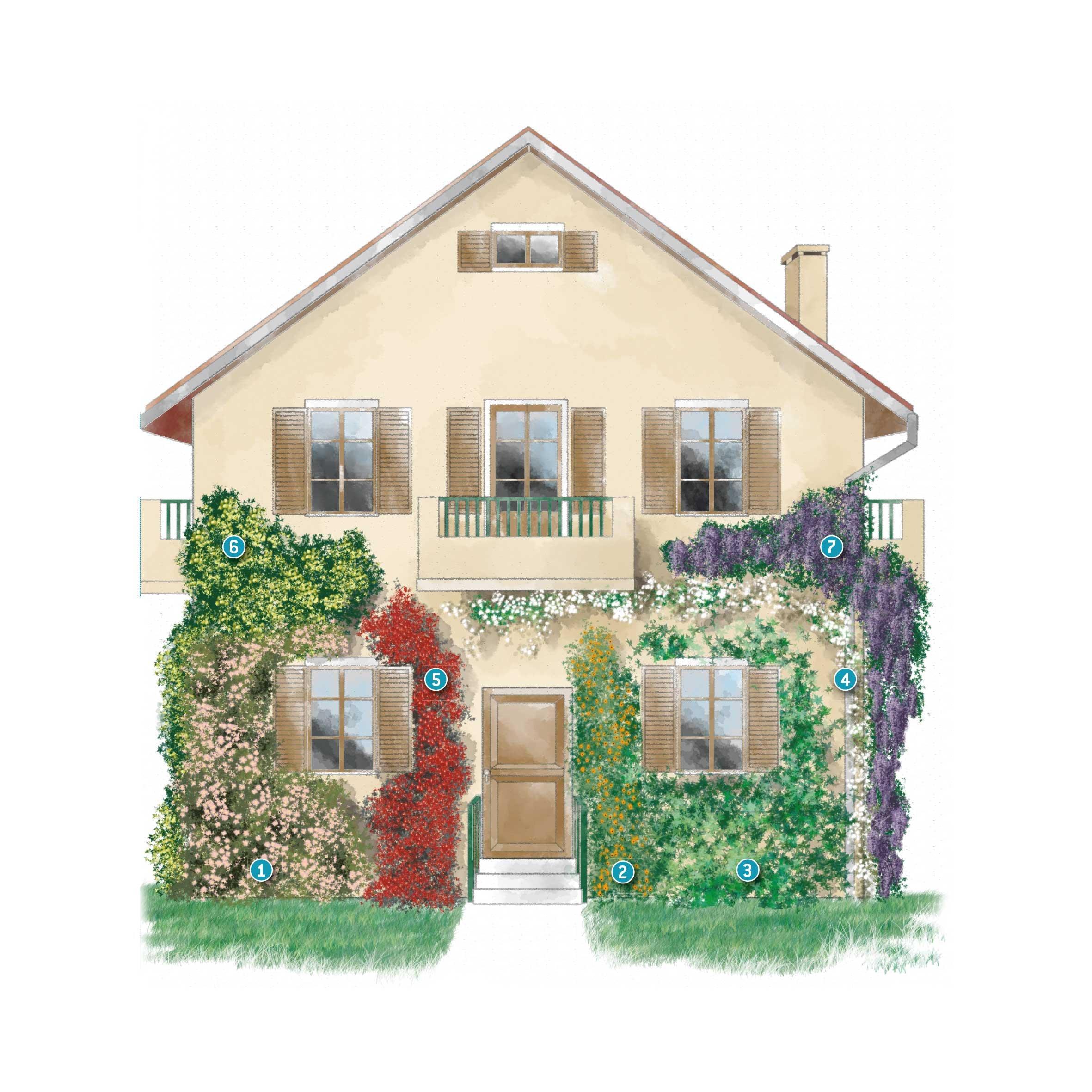 Rinnovare la facciata della casa con le piante rampicanti - Facciata di una casa ...