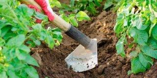 Nell'orto: i lavori indispensabili adesso