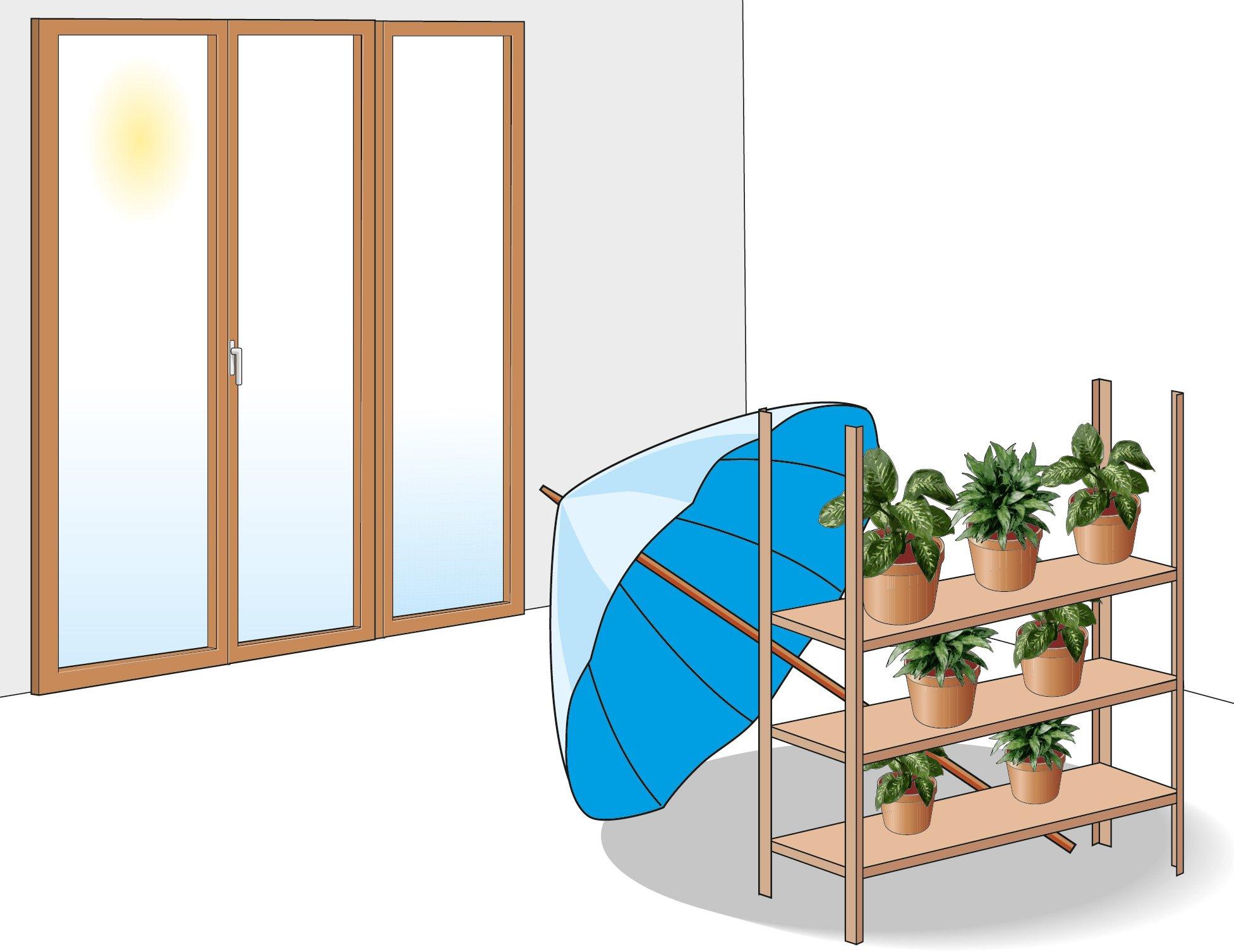 Piante in casa acqua e ombra devono essere garantite cose di casa - La finestra verde giugliano ...