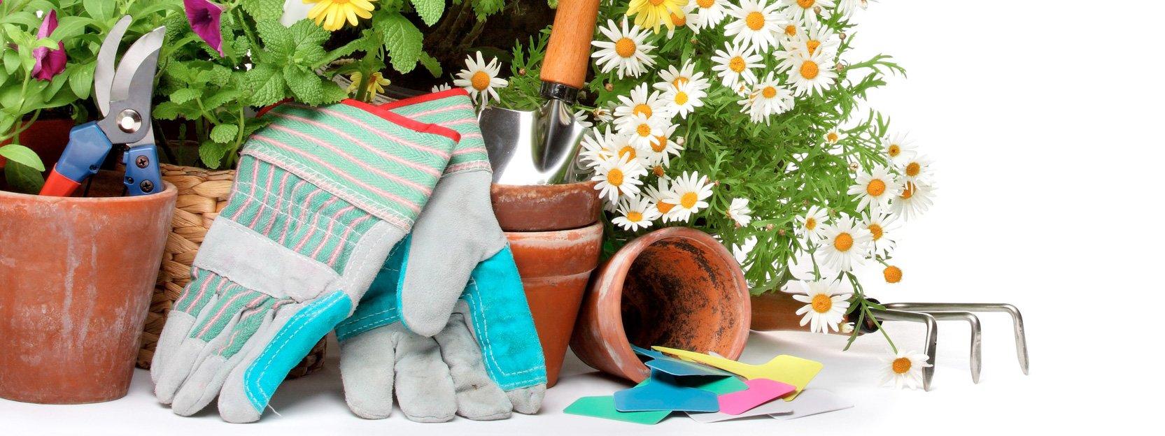 I lavori in giardino ad agosto cose di casa - Lavori in giardino ...