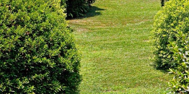 Un serpente in giardino: che fare?
