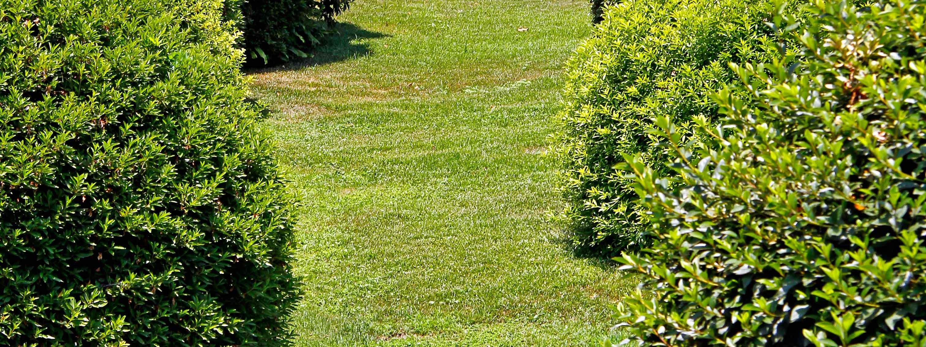 Un serpente in giardino che fare cose di casa for Ristrutturare un giardino