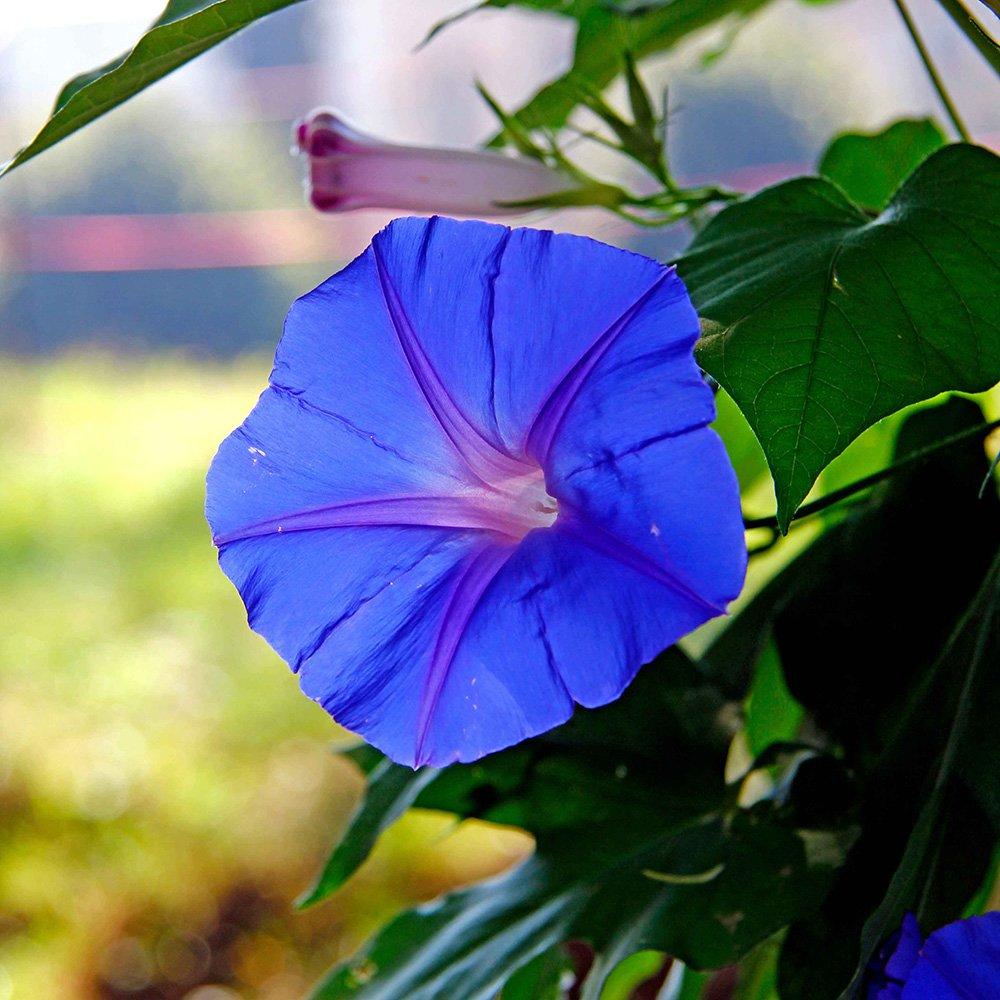 In edicola dal 23 agosto casa in fiore di settembre cose for Fiori di agosto