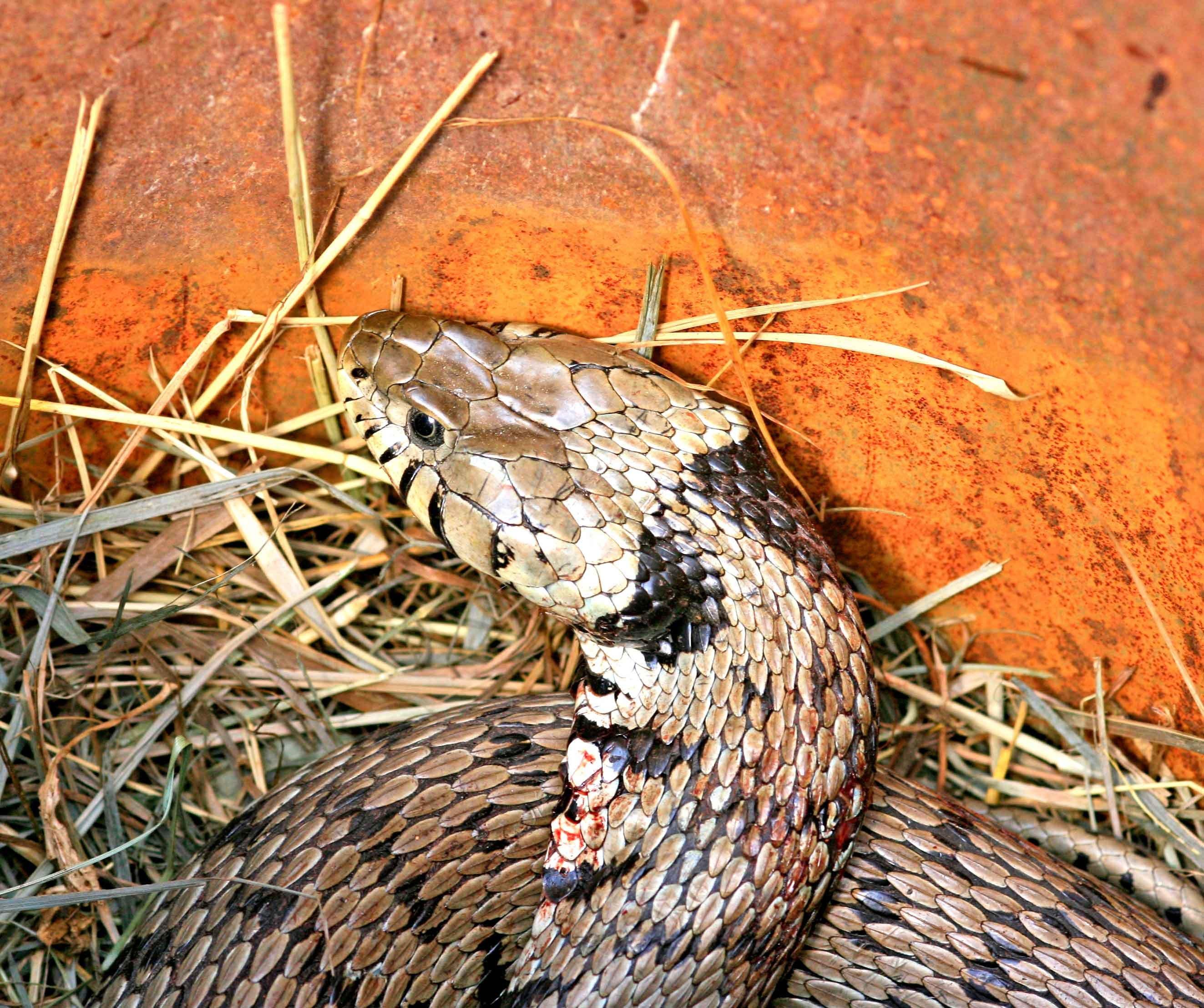 Allontanare Lucertole Dal Terrazzo un serpente in giardino: che fare? - cose di casa