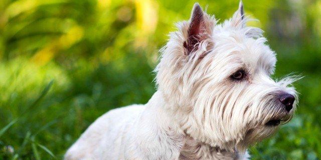 Cane: gli alimenti giusti, tra gusto e salute