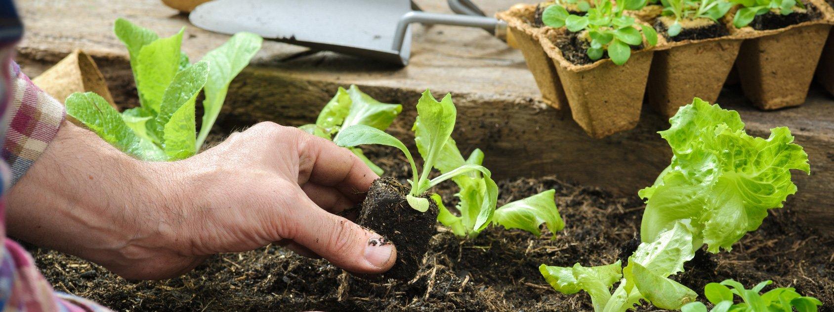 orto autunnale cosa piantare cose di casa