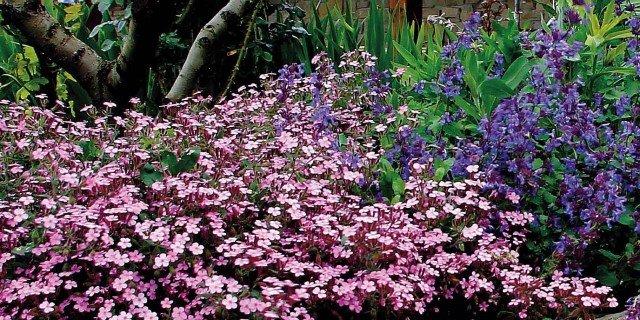 Le piante tappezzanti che fioriscono nelle zone difficili for Piante da giardino mezz ombra