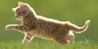 Capire il linguaggio dei gatti