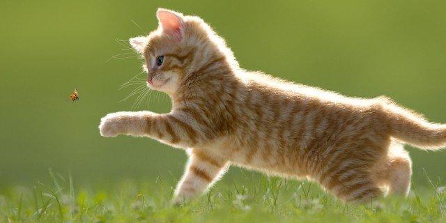 Capire il linguaggio dei gatti cose di casa for Piccoli piani colonica con foto