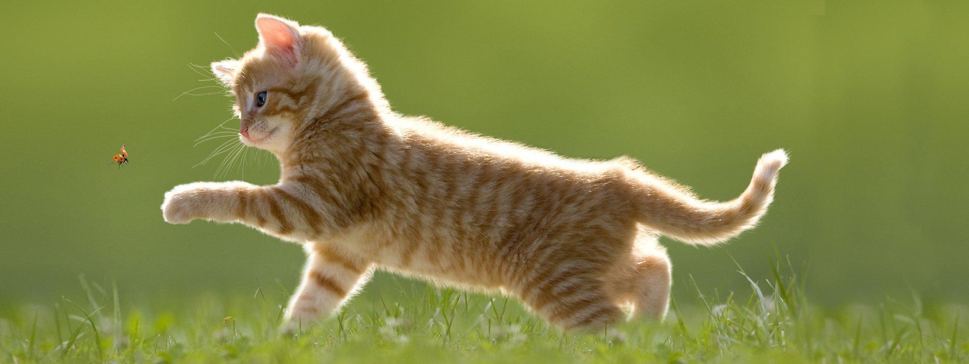 Segni di vermi a un gattino mensile