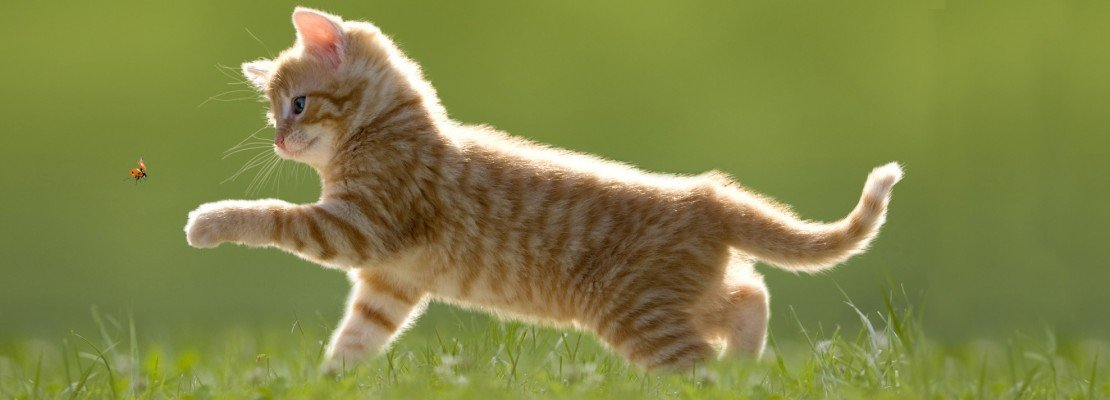 Capire il linguaggio dei gatti cose di casa for Il linguaggio dei gatti