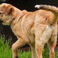 Canile gattile e non solo aiutare i nostri amici animali for Lavorare con i cani