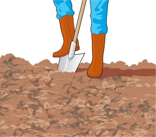 1. Preparare in modo adeguato il terreno effettuando la vangatura a una profondità di 25 centimetri. Livellare il terreno ed eventualmente colmare le buche che si sono create.