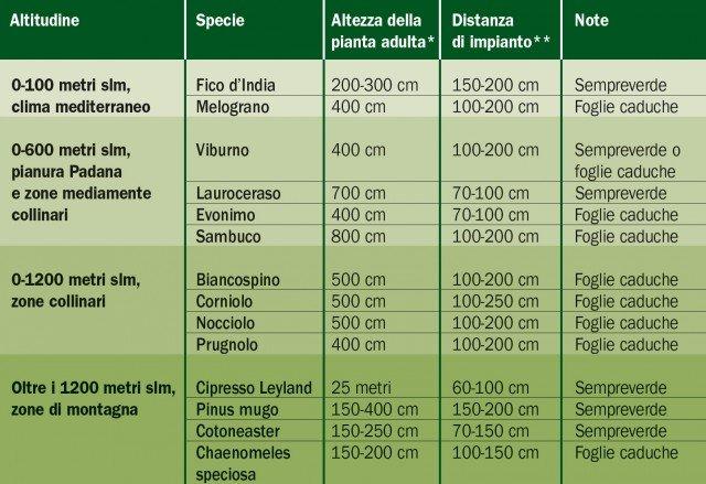 siepe-tabella