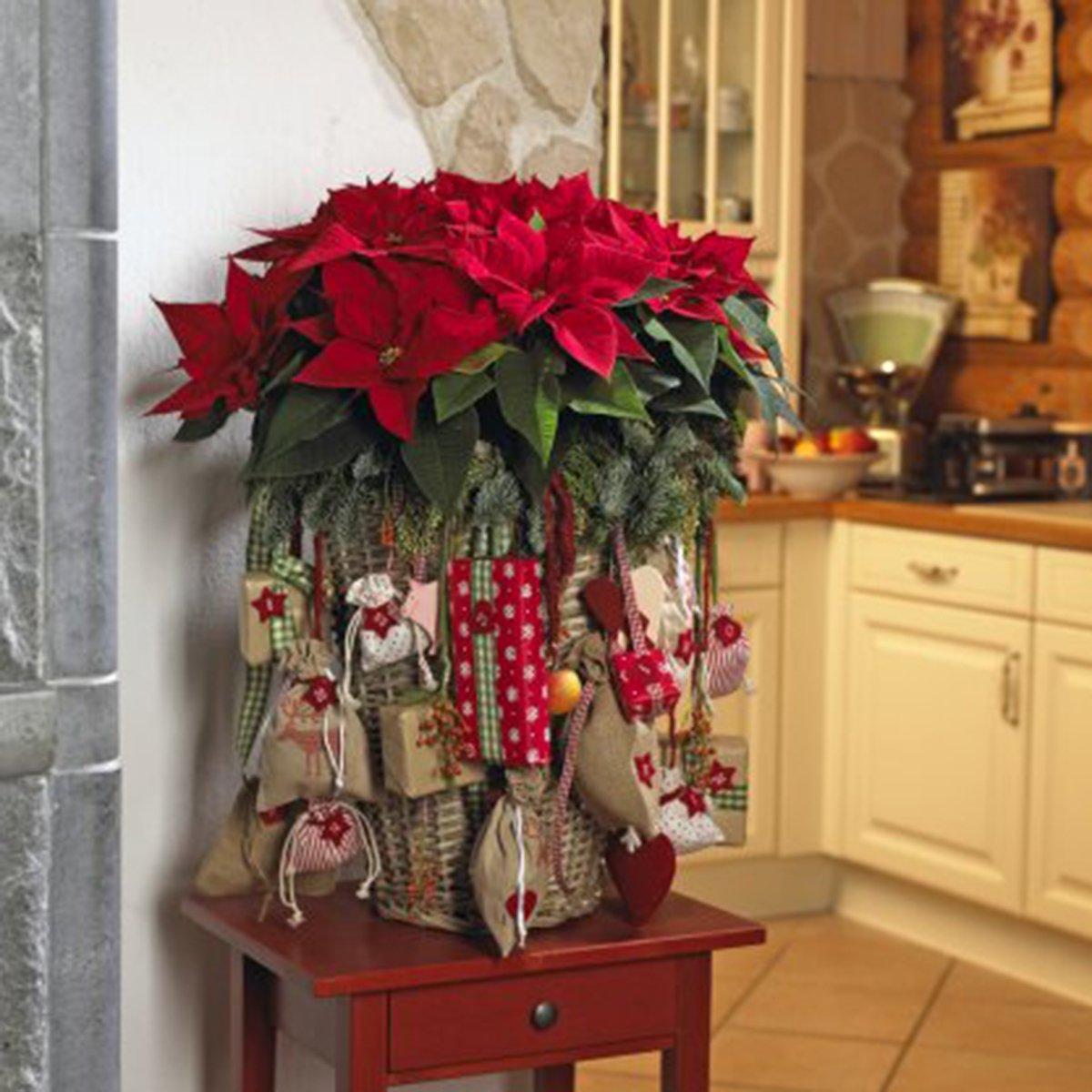 Stella di natale per il calendario dell 39 avvento fai da te - Addobbi natalizi per finestre fai da te ...