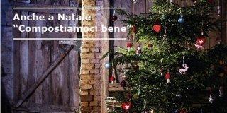 Acquisti l'albero di Natale e aiuti il bosco
