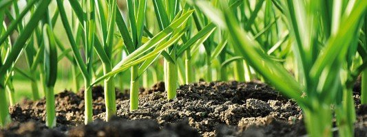 L 39 orto e la casa cose di casa for Cosa piantare nell orto adesso
