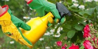 Piante: controllare le malattie autunnali