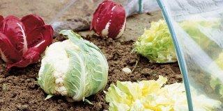 ortaggi crescono tunnel orto