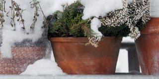 protezione piante in inverno