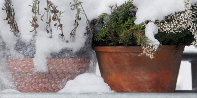 Proteggere dal freddo le piante in vaso cose di casa - Percentuale di umidita in casa ...