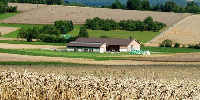 Imu terreni agricoli pagamento in scadenza il 26 gennaio for Pagamento imu