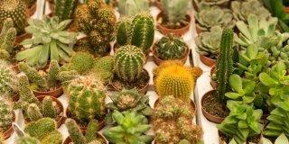 piante grasse piccole