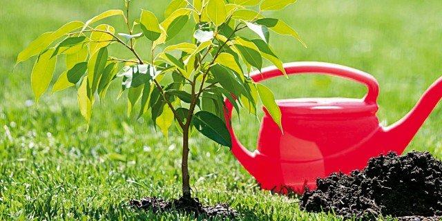 Comprare un albero: le domande da farsi prima