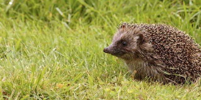 Animali selvatici tra noi: come aiutarli