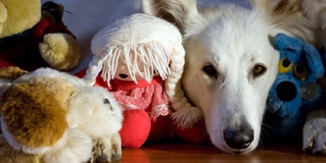 Cane: proteggilo dalla leishmaniosi