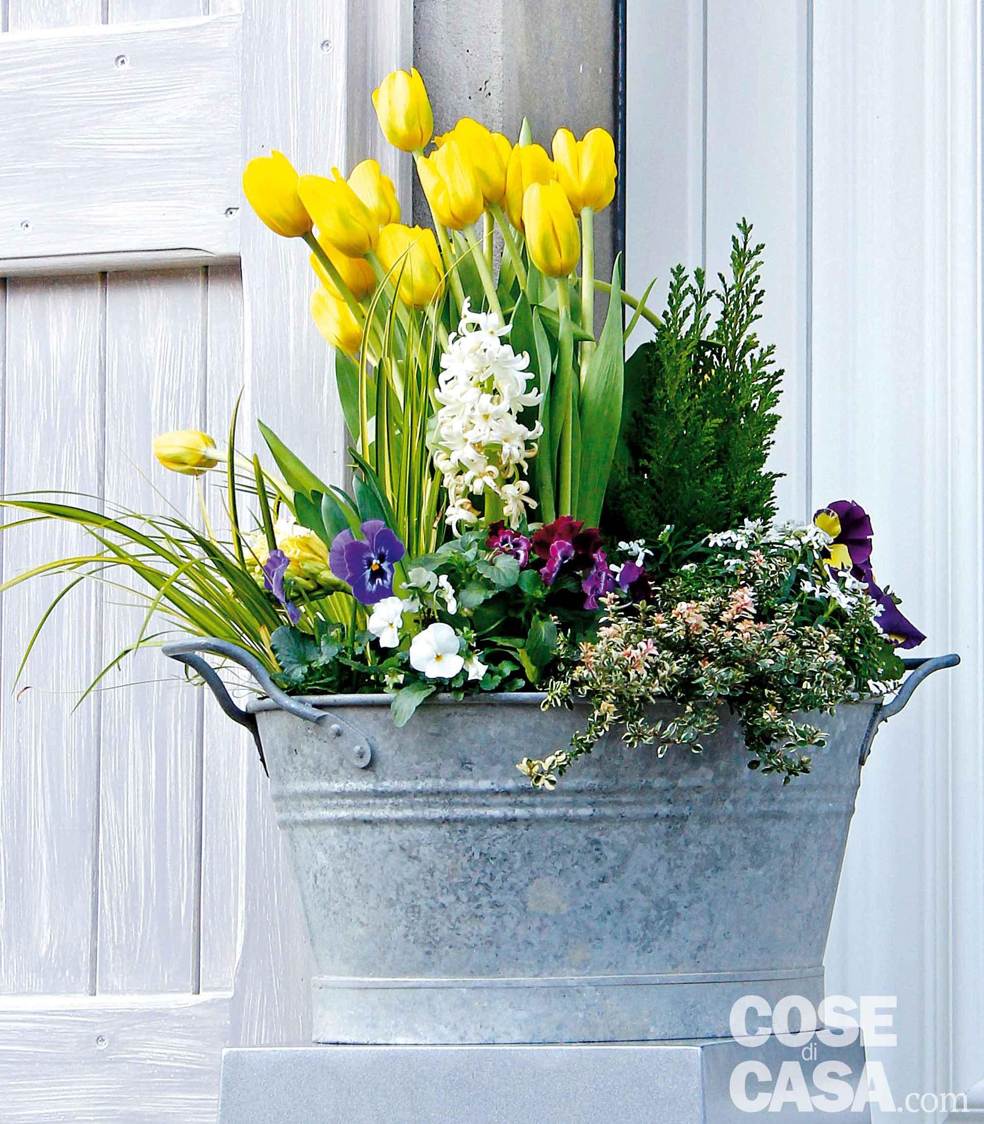 Che Cosa Sono I Bulbi il mastello con tulipani, viole, giacinti e iberis bianche