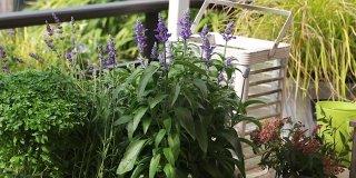 I controlli da fare alle piante protette
