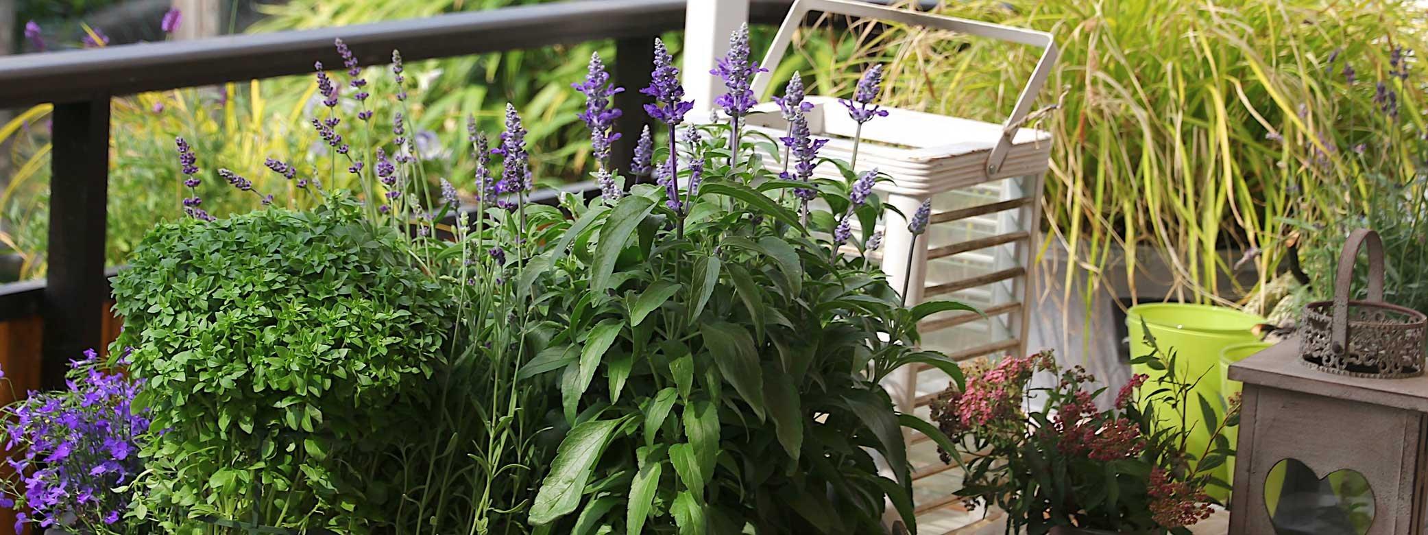 Pi privacy in balcone cose di casa - Idee per terrazzi fioriti ...